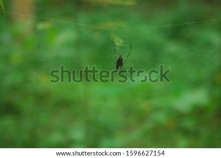 spider on a transparant net on the forest #1596627154