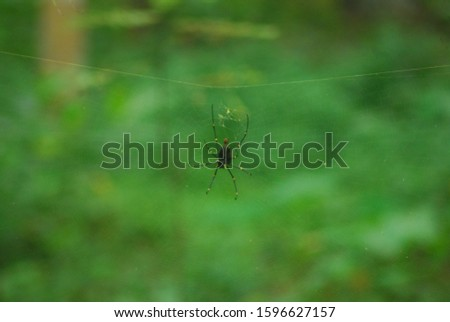 spider on a transparant net on the forest #1596627157