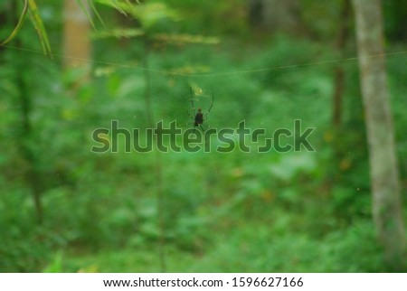 spider on a transparant net on the forest #1596627166