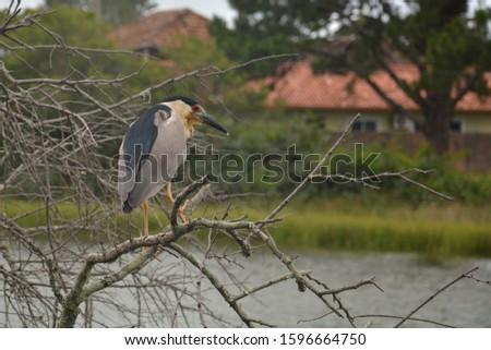 birds on the Canal at Barra da Lagoa area of Lagoa da Conceicao - Florianopolis, Santa Catarina, Brazil #1596664750