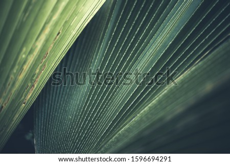 Greenery background, green color of nature plant and leaf environment greenery concept #1596694291