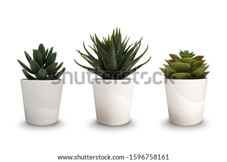 set of small tree in white pot isolated on white background with clipping path. #1596758161