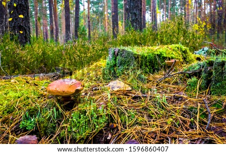 Mushroom in forest autumn scene #1596860407