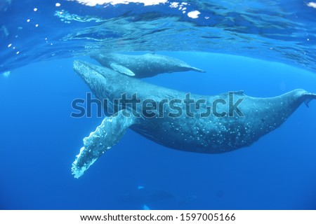 Pictures of sea creatures living in nature and beautiful ocean.