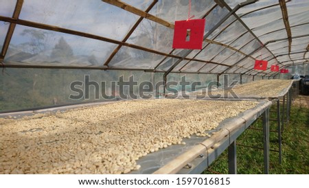 The coffee drying process of the villagers makes roof structures using bamboo weaves that are made of clear plastic in order to receive sunlight. Below is a wooden table. Build on the lawn #1597016815