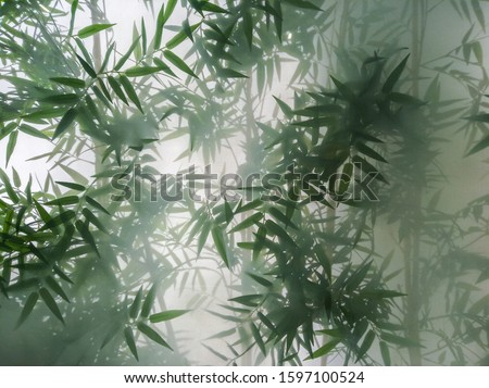 tropical bamboo trees behind the frosted glass in the fog with backlighting. decoration of green plants premises, background. the natural exotic design. Royalty-Free Stock Photo #1597100524