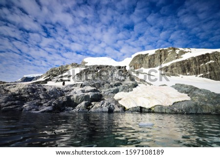 Antarctica Peninsula Penguin Colony ice and diving #1597108189