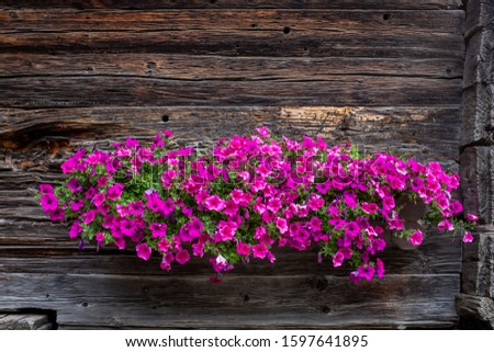 Detailed view on vivid flowers on a typical Swiss farm house #1597641895