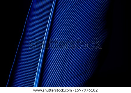 Macro shot a bird feather close-up in Black background ,Parrot feather macro texture, Blue macro feather,Feather, Animal, Bird, UK, Macaw,Feather, Bird, Animal, Australia, Macrophotography #1597976182