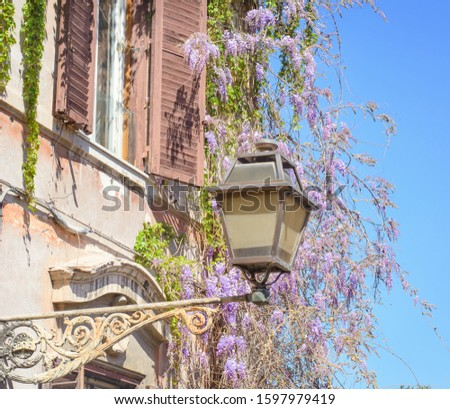 Roman street old lantern and blooming wisteria #1597979419