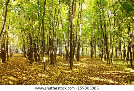 Beautiful evening in the autumn forest with sun rays #159803885