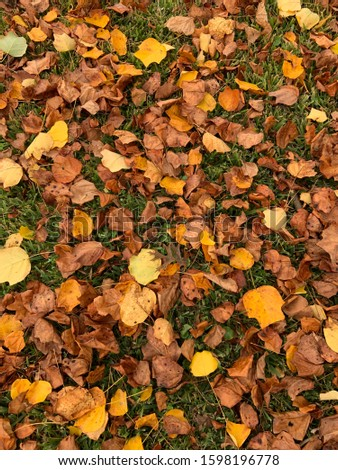 Fall leaves on the ground #1598196778