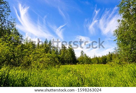 Summer green forest meadow view. Green meadow in summer forest. Summer forest meadow scene #1598263024