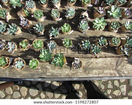 Succulent plants in the nursery #1598272807