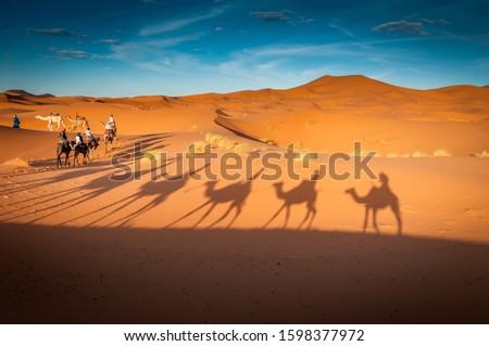 guided camel tours in the sahara desert in Dubai, United arab Emirates, Oman, Bahrain, merzouga Morocco, Tunisia #1598377972