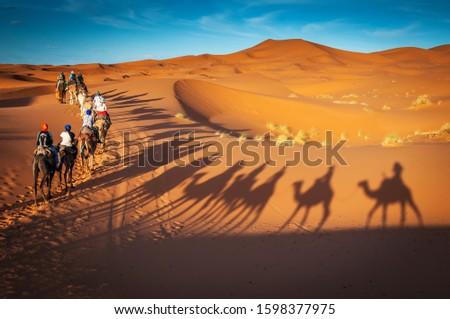 guided camel tours in the sahara desert in Dubai, United arab Emirates, Oman, Bahrain, merzouga Morocco, Tunisia #1598377975