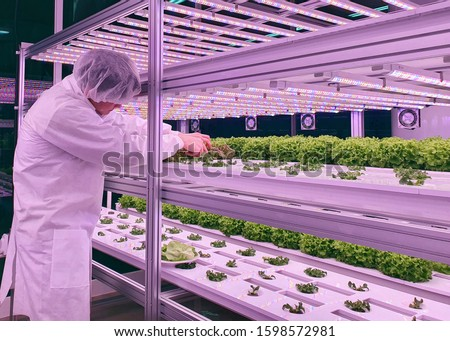 Vertical farm(indoor farm) researcher takes care of vegetables growing on vertical farm. Vertical farming is sustainable agriculture for future food. #1598572981