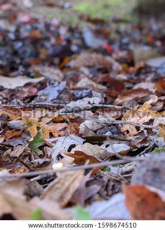 fall leaves on the ground #1598674510