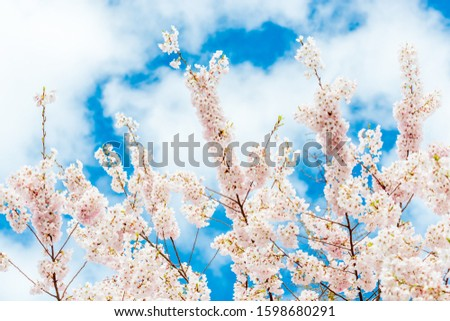 Beautiful floral spring abstract background of nature. Branches of blossoming macro with soft focus on gentle light background. For easter and spring greeting cards with copy space. #1598680291