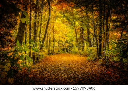 a path in the woods full of trees and green leaves during the fall season for health and beauty industry backgrounds #1599093406