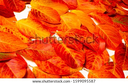 texture, background, pattern, autumn leaves, bright saturated colors, trees are amazingly beautiful in autumn, nature says goodbye to warm summer days #1599095587