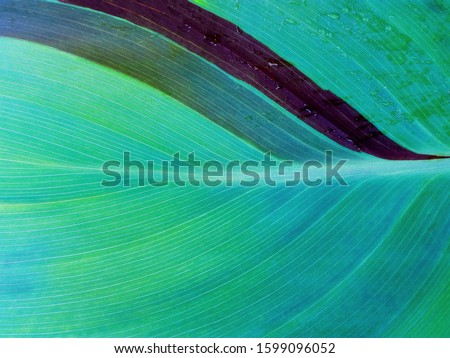 Aqua menthe color leaf macro texture background. Trendy green & blue turquoise color (aqua menthe) of 2020 year. Tropical leaf background - nature concept top view. Leaf texture closeup in aqua menthe #1599096052