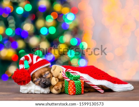 Cute tiny toy terrier puppy wearing a red warm hat hugs toy bear and sleeps on pillow under blanket with gift box and candy cane on festive Christmas background #1599130573