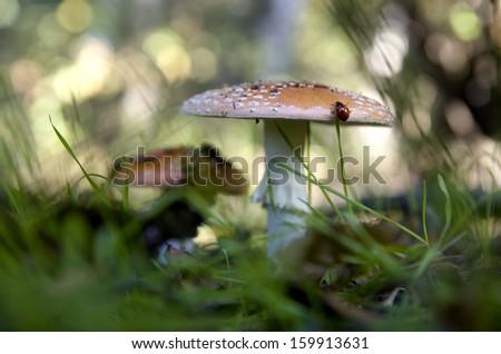 Mushroom #159913631