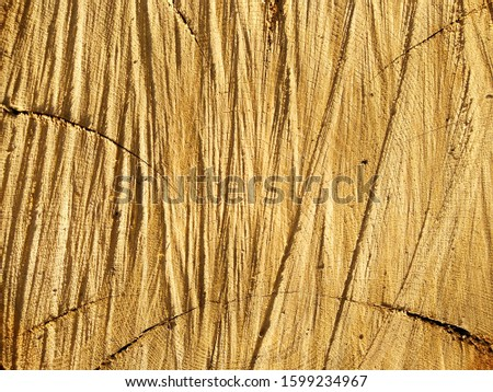 Wood texture. Wood background. Unprocessed. Sectional tree trunk.  Tree trunk cutaway. Traces of a chainsaw. #1599234967