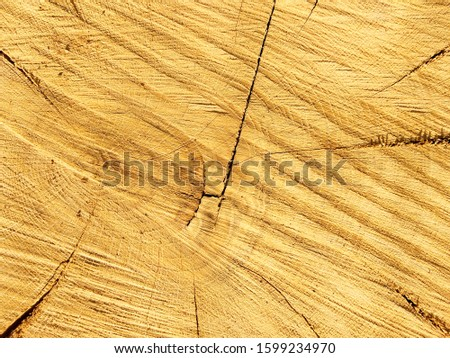 Wood texture. Wood background. Unprocessed. Sectional tree trunk.  Tree trunk cutaway. Traces of a chainsaw. #1599234970