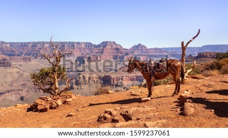 Indian Horse at Cedar Ridge in Grand Canyon National Park in Ari #1599237061