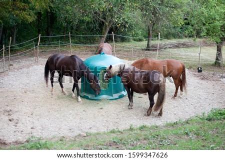 Horses feeding outside with Hay Rack #1599347626