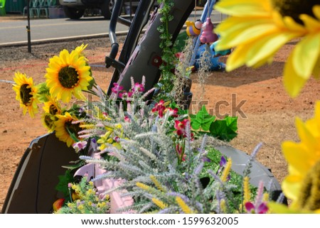 Sunflower natural background. Sunflower blooming. sunflower, sunflower garden in the reservir, flower. #1599632005