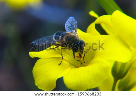 Macro Photography of a Bee #1599668233