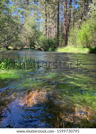Hat Creek California, National Forest #1599730795