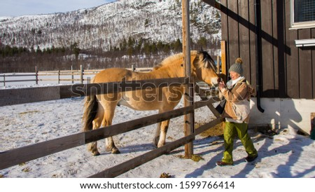 Alta, Norway, 03/25/2019: rare Norwegian Fjord Horse breed at a farm #1599766414