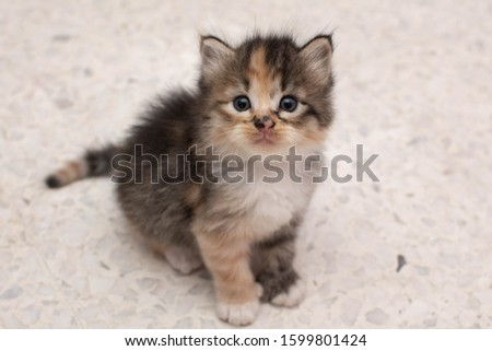 Lovely Adorable Cute Kitten Actions #1599801424