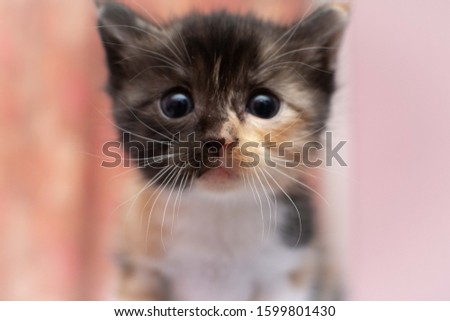 Lovely Adorable Cute Kitten Actions #1599801430
