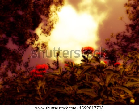 Blurry reddish background with flowers #1599817708