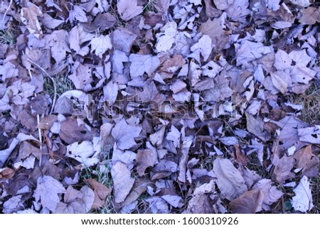 The beauty of fall leaves on the ground #1600310926