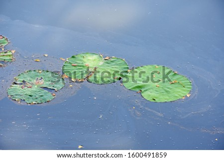 Green lotus leaf on the water surface #1600491859