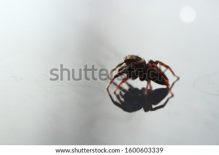 Macro of Spider on Mirror Reflection #1600603339