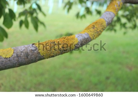 Tree moss water droplets lichen greenery foliage insects foliage in a backyard garden with leaves, blue skies, branches and nature of Tasmania, Australia #1600649860