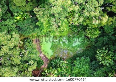 Green lush of tropical jungle #1600790464