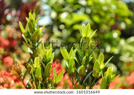 In botany, it is called bud or bud, the initial formation of a branch of vascular plants, formed by meristematic cells. In common language, the words sprout, bud or bud are preferably used. #1601016649
