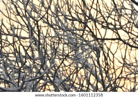 The surface and branches of the central tree are many, many, many stages of shallow depth of field, the light background from the sun. #1601112358