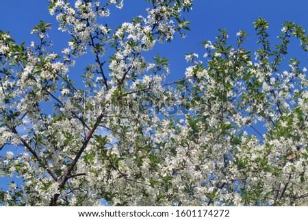 Beautiful flowers of Bishkek, Kyrgyzstan #1601174272