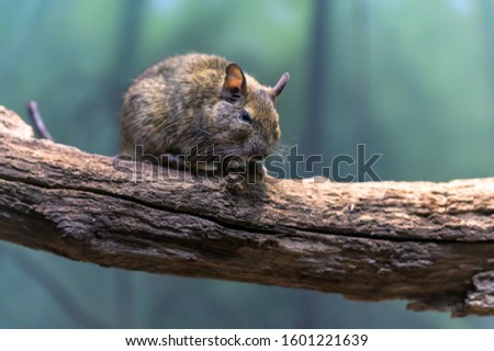 A small rodent sitting on a branch #1601221639