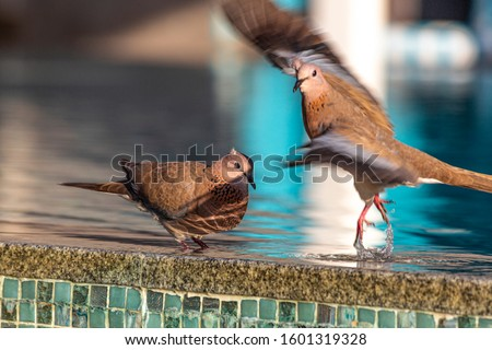 Close up picture of nice colored dove sitting on pool border