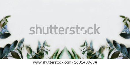 symmetrical frame of eucalyptus branches and leaves #1601439634
